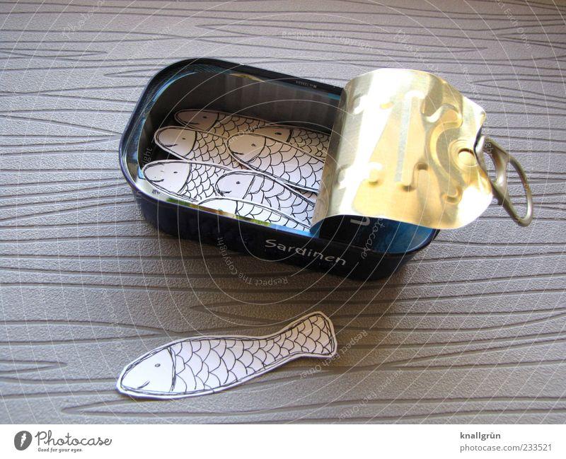 Sardinen Tier Ernährung grau Metall gold offen glänzend liegen außergewöhnlich Fisch Fisch Tiergruppe silber Verpackung Dose falsch