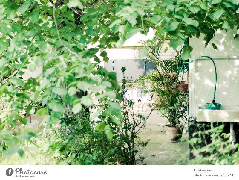 Oase Pflanze Sommer Baum Sträucher Blatt Grünpflanze Garten frisch grün Linde Palme bewachsen Farbfoto Außenaufnahme Lichterscheinung Sonnenlicht