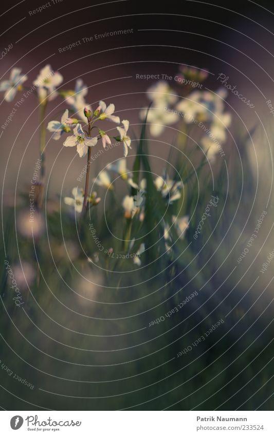 sanft Natur grün Pflanze Blume Erholung Umwelt Wiese Gras Frühling ästhetisch Blühend Duft Frühlingsgefühle Wildpflanze