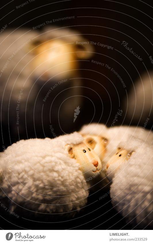 Mäh! Tier Fell Tiergruppe Tierjunges Tierfamilie schwarz weiß Gefühle Geborgenheit Zusammensein Zusammenhalt Farbfoto Studioaufnahme Textfreiraum oben