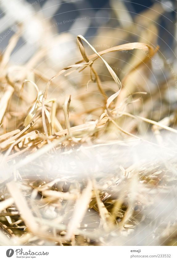 Osternest: leer trocken Stroh Nest Sonnenlicht