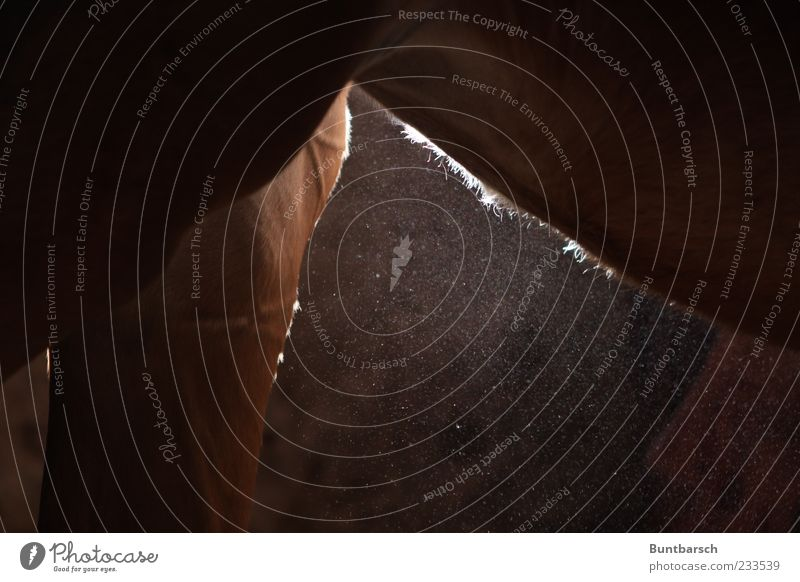 Bauchhärchen Tier Nutztier Pferd Trakehner Beine Fell Hinterbein 1 stehen außergewöhnlich dick muskulös natürlich braun Perspektive Pferdezucht Staub staubig