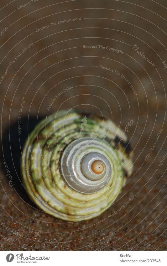 Schneckenhaus Natur Ferien & Urlaub & Reisen Strand braun Sand Dekoration & Verzierung rund Unbewohnt Spirale Symmetrie Muschel Hülle maritim Strandgut