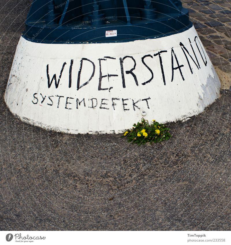 Widerstand Systemdefekt weiß Blume schwarz Graffiti kaputt Asphalt Löwenzahn gegen Wort Frustration Demonstration Revolution protestieren widersetzen