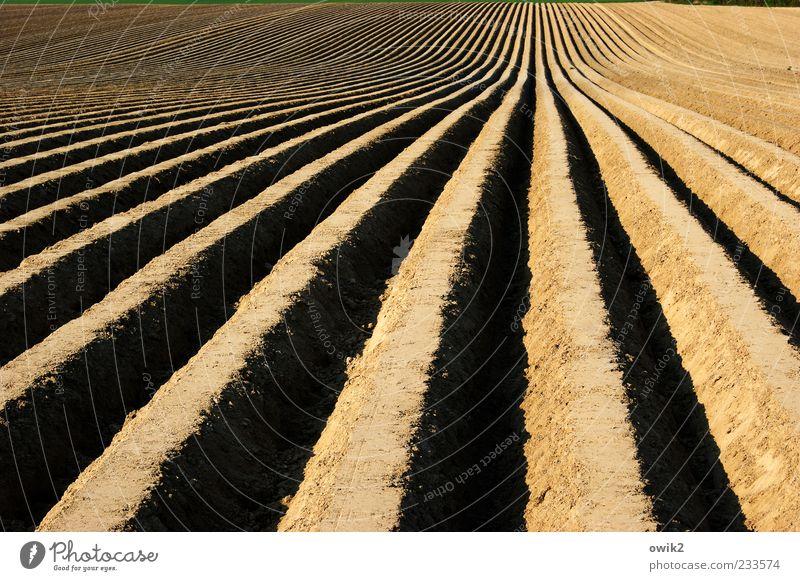 Spargellinien Natur schwarz ruhig Ferne Umwelt Landschaft braun Erde Arbeit & Erwerbstätigkeit Feld natürlich Ordnung Hoffnung einfach Hügel Unendlichkeit