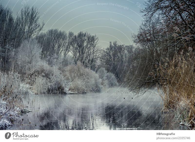 Winterwonderland Umwelt Natur Landschaft Pflanze Wasser Eis Frost Schnee Schneefall Wald Moor Sumpf Teich See Bach Fluss kalt weiß Stimmung Klima Winterstimmung