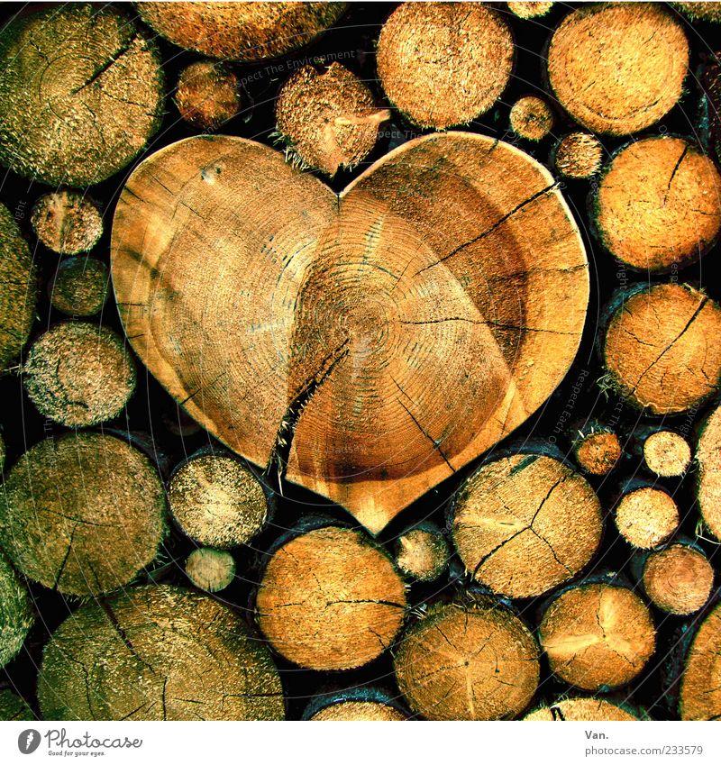 Holz ist... Natur schön Baum gelb Gefühle Glück braun Herz rund Baumstamm Riss Stapel beige Brennholz Holzstapel