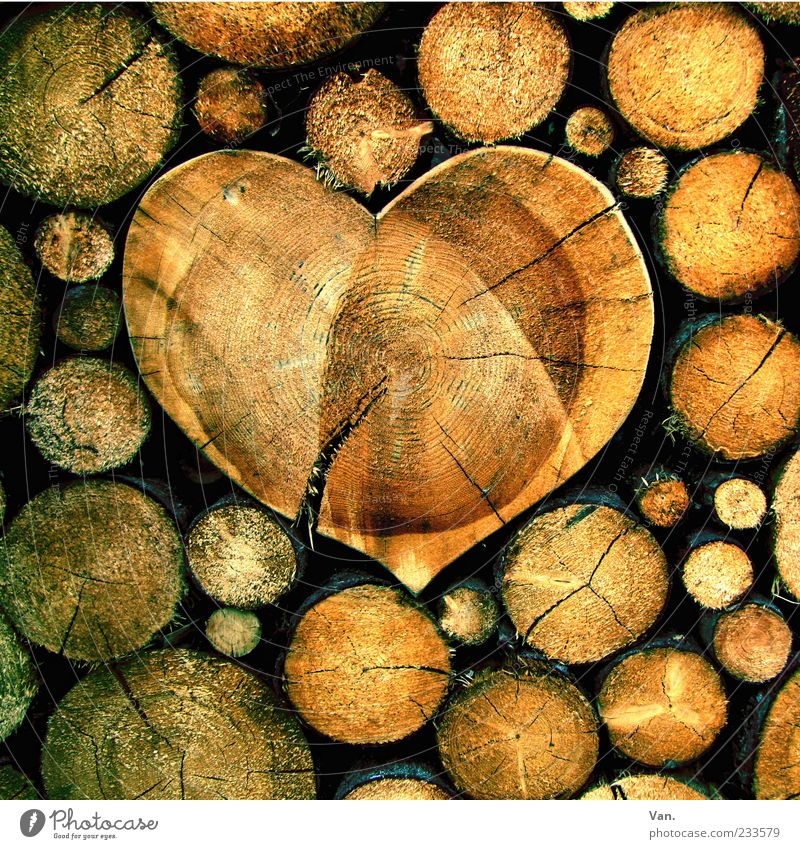 Holz ist... Natur schön Baum gelb Gefühle Holz Glück braun Herz rund Baumstamm Riss Stapel beige Brennholz Holzstapel