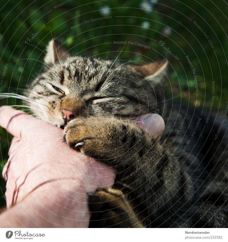 Liebe zeigen Katze Hand Sommer Freude Tier Wiese Spielen Frühling Finger verrückt Fell Kontakt genießen Lebensfreude Kontrolle kämpfen