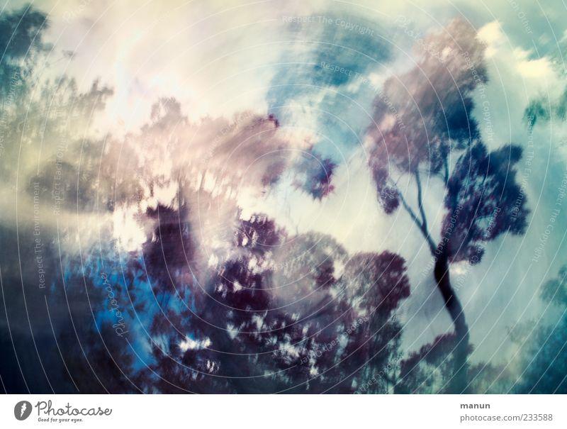 natural abstraction Himmel Natur Baum Wolken Wind natürlich außergewöhnlich einzigartig fantastisch bizarr Baumkrone exotisch Surrealismus Textfreiraum