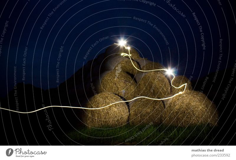 NÄCHTLICHES GEWUSEL Natur Pflanze Umwelt dunkel Wiese Landschaft Bewegung Gras Linie Beleuchtung Horizont Feld außergewöhnlich ästhetisch Sträucher rund
