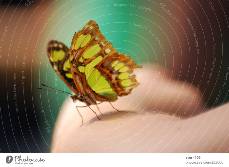 get ready to fly Natur Sommer ruhig Umwelt Glück Zufriedenheit Arme sitzen Wildtier Flügel Romantik Neugier Frieden Gelassenheit Schmetterling Botanik
