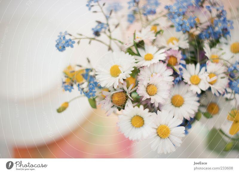 mein erstes blümchenbild... schön Pflanze Sommer Blume Gefühle natürlich Geschenk Dekoration & Verzierung Lifestyle zart Blumenstrauß Gänseblümchen