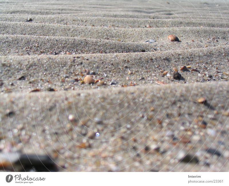 Sandwellen Strand Stein Sand Wellen glänzend Korn Muschel wellig