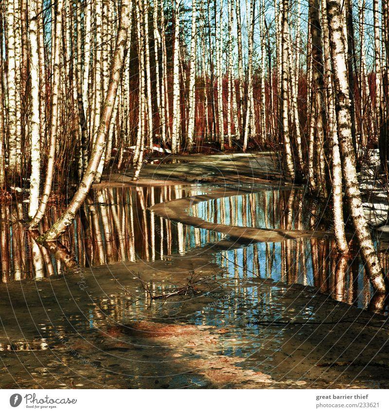Wasser Birken Fluss Idyll Skandinavien Finnland Umwelt Natur Landschaft Urelemente Schönes Wetter Baum Moor Sumpf blau mehrfarbig Wald Birkenwald Eis kalt