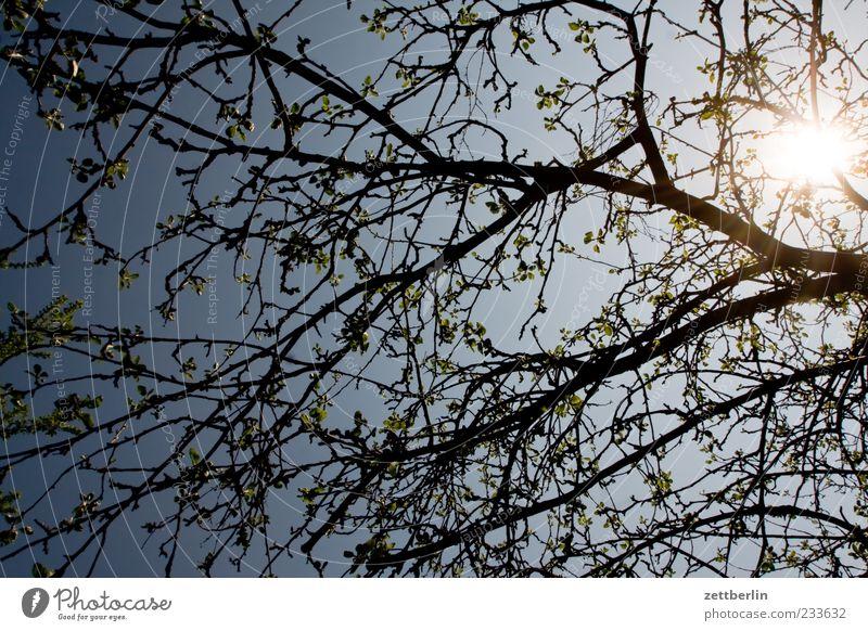 Gegenlicht Pflanze Himmel Wolkenloser Himmel Frühling Klima Klimawandel Schönes Wetter Blüte Blühend Wachstum Blütenknospen Farbfoto Gedeckte Farben