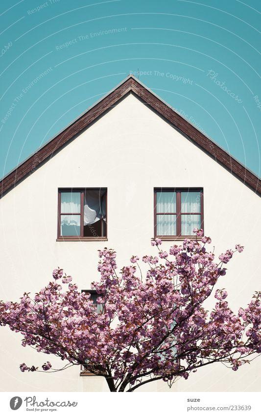 Damenbart Häusliches Leben Haus Frühling Schönes Wetter Baum Blüte Fassade Fenster Dach Blühend Freundlichkeit schön blau rosa weiß Wachstum Spitzdach Ast