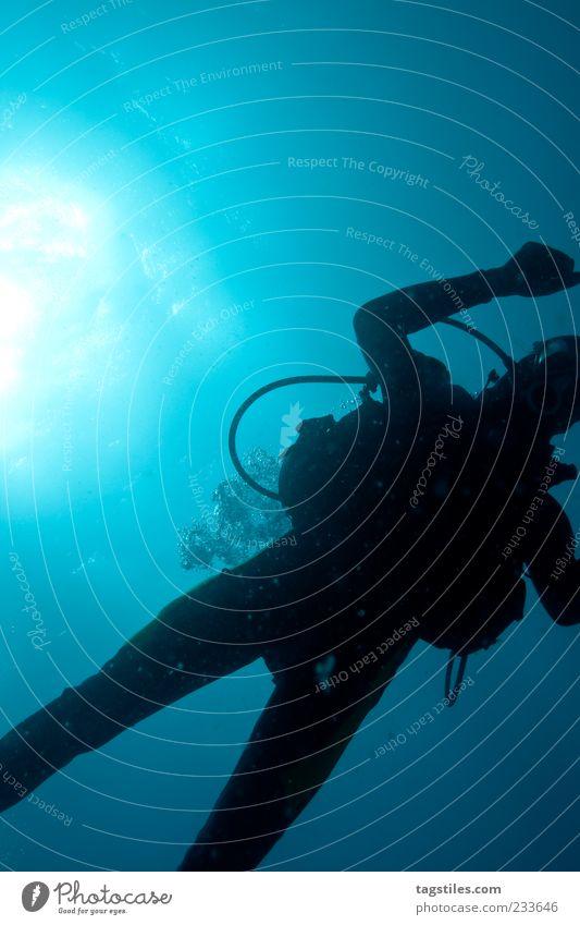 OUTER SPACE untergehen tauchen Taucher Natur Wasser Meer natürlich dunkel Silhouette Farbfoto Textfreiraum oben Wasseroberfläche Unterwasseraufnahme blau Mann