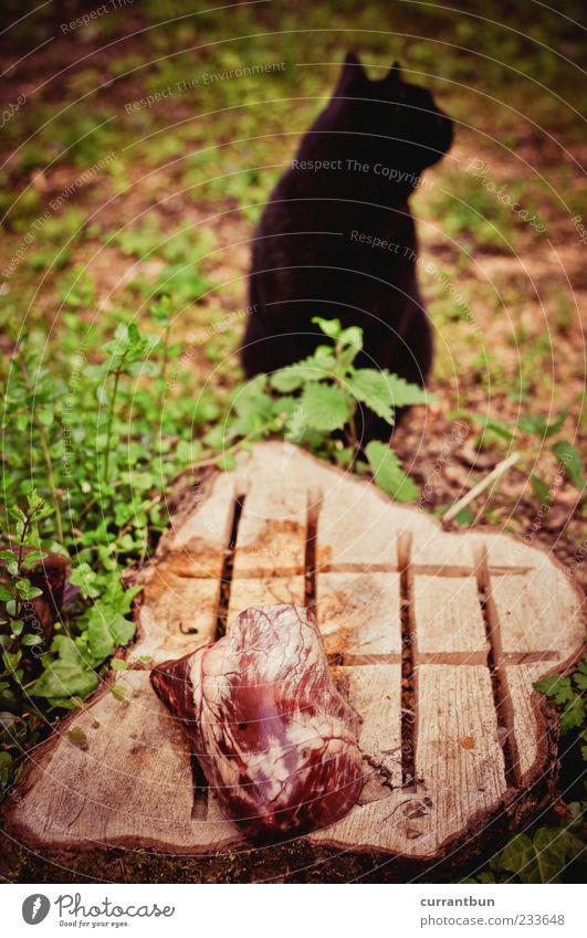 Heart Attack Katze grün schwarz Holz Fleisch Fleischfresser Baumstumpf verweigern Katzenkopf Katzenohr