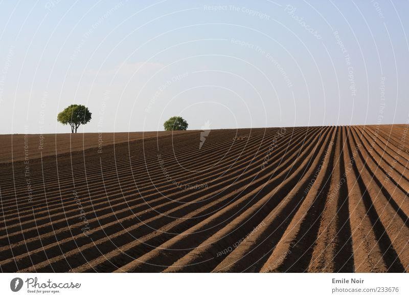 Welt der klaren Farben Landschaft Erde Himmel Wolkenloser Himmel Dürre Baum Feld Linie Farbfoto Außenaufnahme Menschenleer Textfreiraum oben Abend Furche