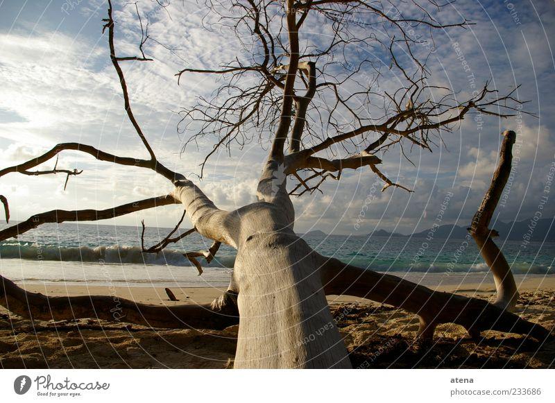 Baum Ferien & Urlaub & Reisen Sommer Strand Meer Wellen Natur Landschaft Sand Himmel Wolken Küste Seychellen Wasser Erholung blau Farbfoto Außenaufnahme Tag