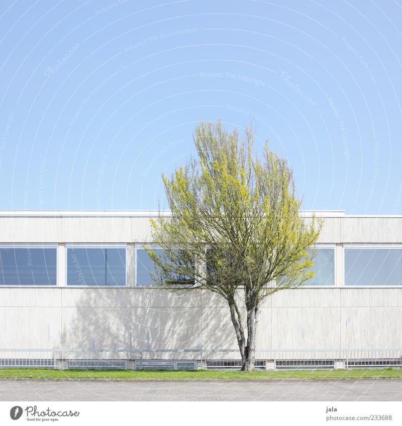 zartes grün Wolkenloser Himmel Frühling Pflanze Baum Wiese Haus Bauwerk Gebäude Architektur Mauer Wand Fassade Fenster blau grau Farbfoto Außenaufnahme