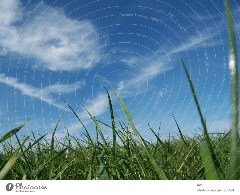 Gras grün Wolken Wiese saftig Himmel blau
