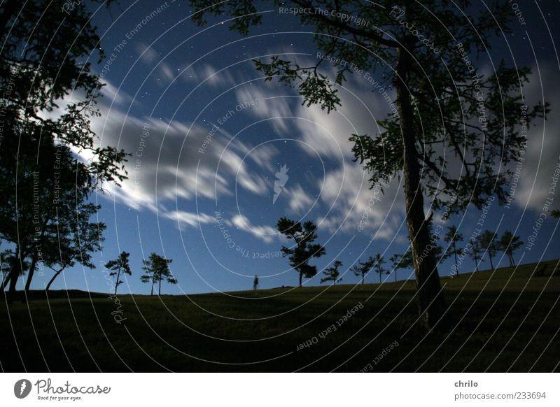 irgendwo im nirgendwo Mensch Himmel Natur blau weiß Baum Wolken ruhig Wald Ferne Landschaft Freiheit Bewegung Horizont Wind leuchten