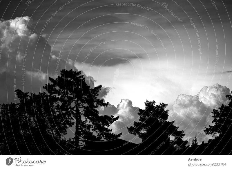 Wolkenlawine Umwelt Landschaft Urelemente Luft Himmel Gewitterwolken Klima Klimawandel Wetter schlechtes Wetter Unwetter Wind Sturm Stimmung Endzeitstimmung