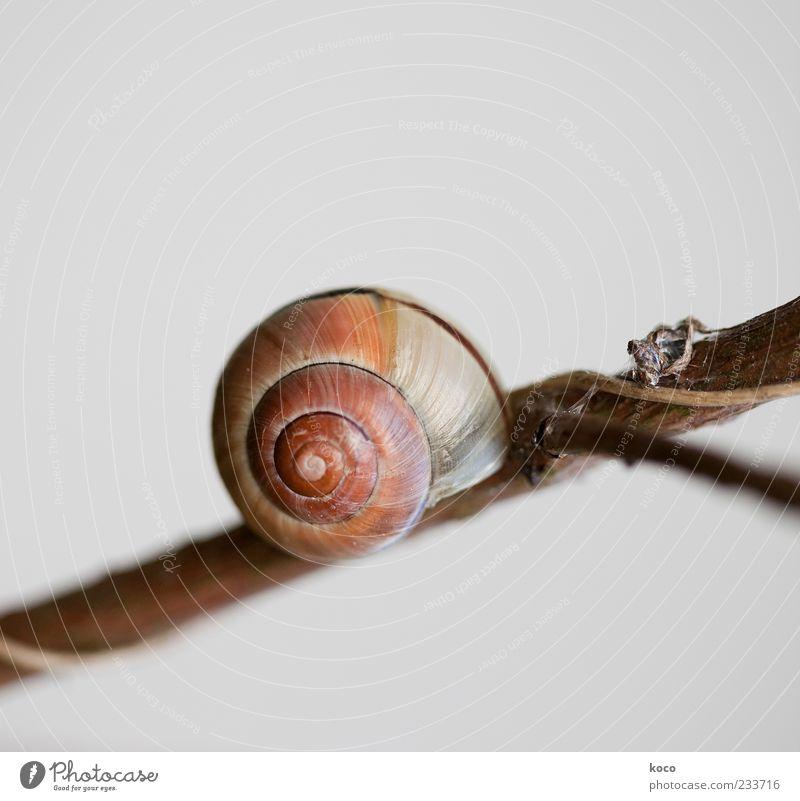 Schneckenhaus Natur Tier Holz klein Zufriedenheit warten schlafen rund Ziel einfach Schutz Zweig Spirale Geborgenheit geduldig