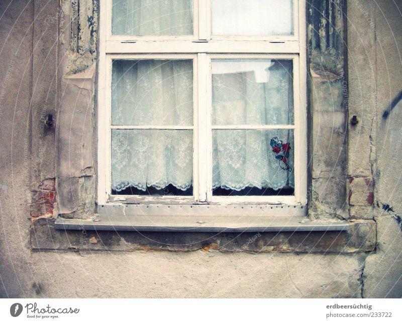 Katzenstammsitz Haus Mauer Wand Fassade Fenster Fensterbrett Fensterscheibe Fensterkreuz Glas alt authentisch grau Gardine verfallen Dekoration & Verzierung