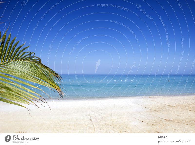 Textfreiraum Wellness Erholung ruhig Ferne Sommer Strand Meer Insel Natur Wasser Himmel Wolkenloser Himmel Klima Schönes Wetter exotisch blau Palme Palmenwedel