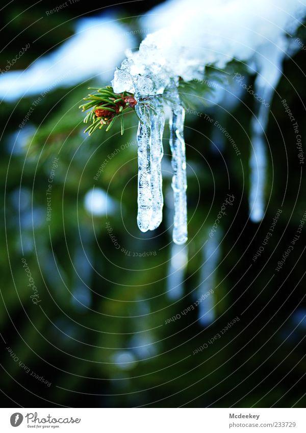 bygone days Natur Wassertropfen Winter Eis Frost Pflanze Baum Eiszapfen fest Flüssigkeit frisch glänzend kalt nass natürlich blau braun grün weiß bewegungslos