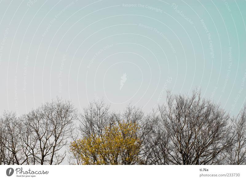 ich hab die Blätter schön Natur blau grün Baum Blatt Umwelt braun Wachstum Baumkrone Wolkenloser Himmel Zweige u. Äste Frühlingsgefühle