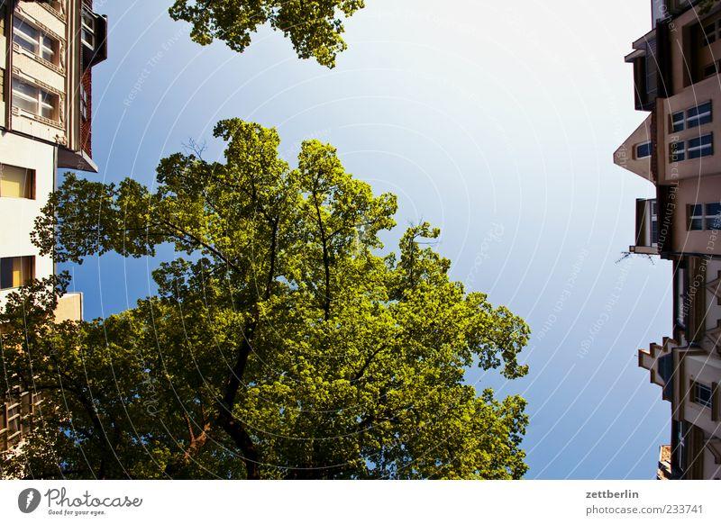 Friedenau Pflanze Himmel Wolkenloser Himmel Frühling Klima Klimawandel Wetter Schönes Wetter Baum Hauptstadt Haus Bauwerk Gebäude Architektur Blühend Wachstum