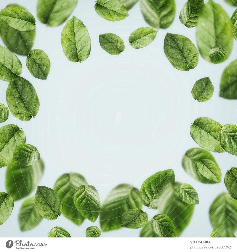 Fallende grüne Blätter , Rahmen Natur Pflanze Sommer Blatt Leben Hintergrundbild Frühling Stil Design Schweben ökologisch Entwurf Teepflanze Ornament