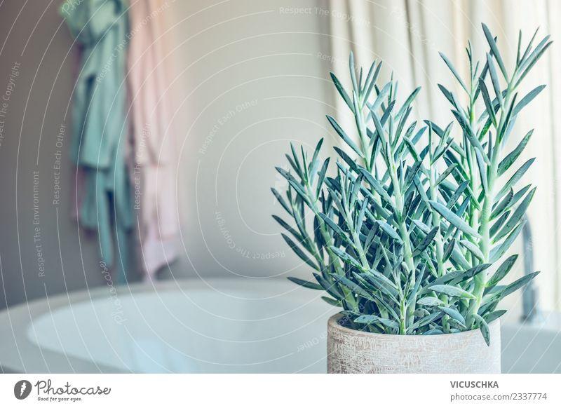 Sukkulenten Pflanze im Badezimmer Lifestyle Stil Design Häusliches Leben Wohnung Dekoration & Verzierung Raum trendy Zimmerpflanze Senecio serpens Topfpflanze