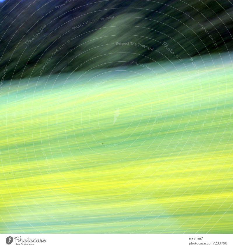 schnelll Natur Landschaft Pflanze Frühling Baum Gras Wiese Wald Blühend hell gelb grün Farbfoto Außenaufnahme Menschenleer Textfreiraum oben Textfreiraum unten