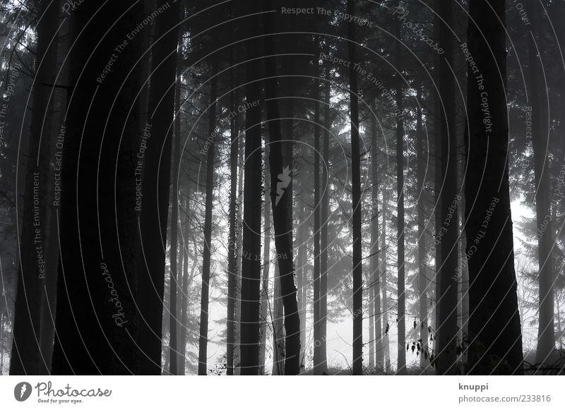 the mist Natur weiß Baum Pflanze schwarz Einsamkeit ruhig Wald Umwelt dunkel Nebel nass gruselig schlechtes Wetter Nadelbaum Düsterwald