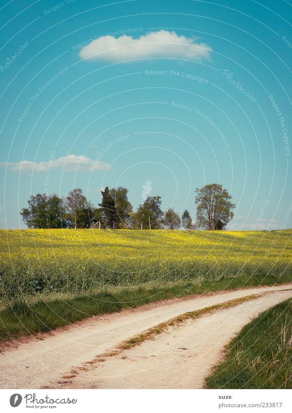 Feldweg Himmel Natur blau grün schön Baum Sommer Wolken Umwelt Landschaft Wiese Gras Wege & Pfade Erde authentisch