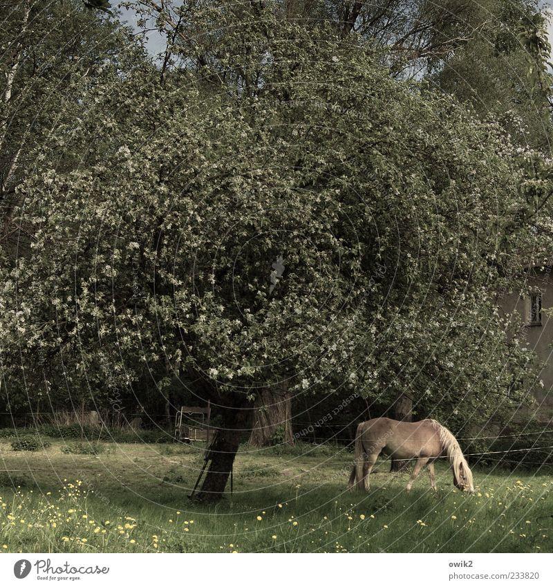 Kleine Farm Natur Baum Pflanze Blatt Tier ruhig Umwelt Wiese Landschaft Garten Blüte Frühling Zufriedenheit Klima Pferd Romantik