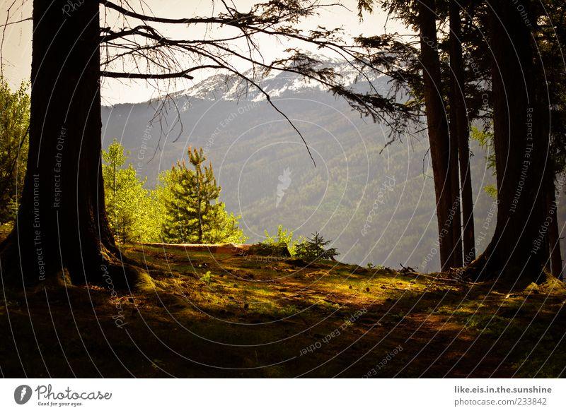 Rotkäppchen wohnt nach der Tanne links Natur Baum Pflanze Sommer Einsamkeit ruhig Wald Ferne Erholung Landschaft Berge u. Gebirge Freiheit Zufriedenheit