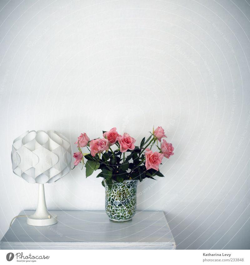 endlich mal wieder aufgeräumt weiß grün Farbe Wand Lampe Wohnung rosa elegant Ordnung ästhetisch Dekoration & Verzierung Häusliches Leben Rose Sauberkeit Idylle Blumenstrauß