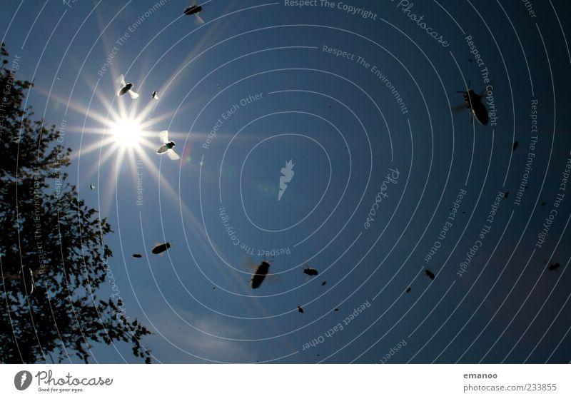 sonnenschwarm Natur blau Baum Sonne Sommer Tier Bewegung klein Garten Luft Arbeit & Erwerbstätigkeit Wetter fliegen natürlich Fliege gefährlich