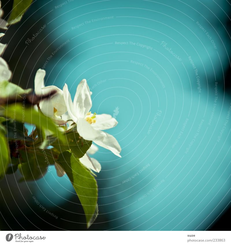 BlueMotion Natur blau schön weiß Pflanze Blatt Umwelt Frühling Blüte Luft Stimmung natürlich Wachstum frisch Schönes Wetter Urelemente