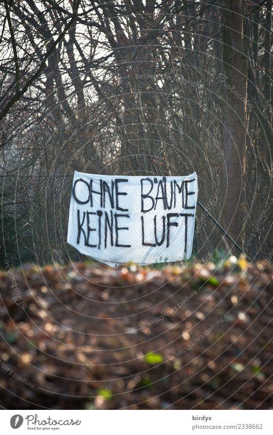 wie wahr ! Natur Pflanze Erde Herbst Winter Baum Transparente Schriftzeichen Hinweisschild Warnschild Graffiti Kommunizieren authentisch nachhaltig positiv Wut