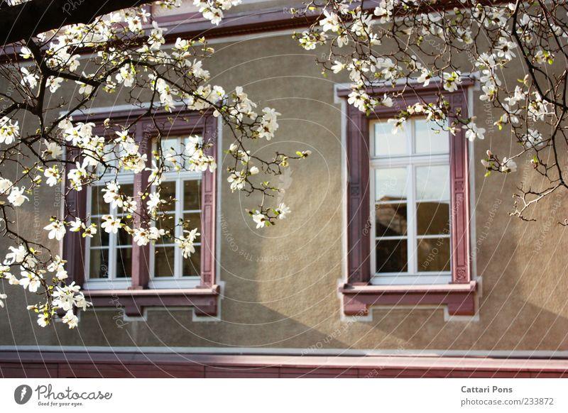 wenn du rein kommst kannst du raus schauen ;) alt Baum Pflanze Sommer Blatt Haus Fenster Wand Holz Blüte Stein Gebäude rosa Fassade groß Häusliches Leben