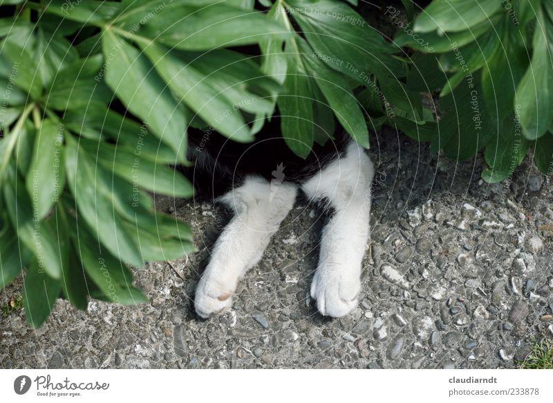 Im Tarnkleid Katze Natur Pflanze Blatt Tier Erholung lustig Beine liegen verstecken Haustier Pfote Tarnung Bodenplatten Trägheit spaßig