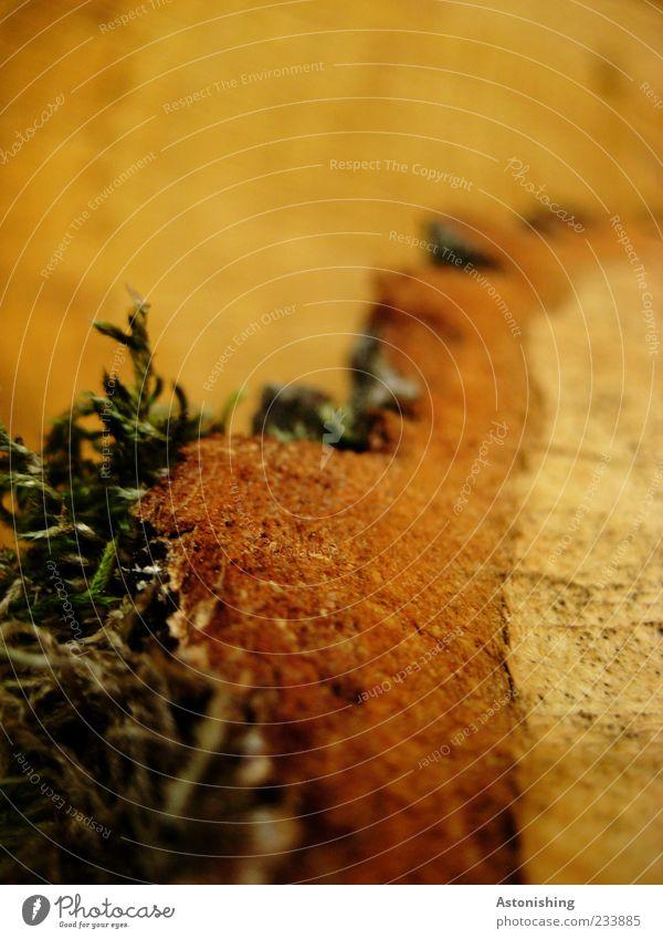 Baumrand Natur grün Pflanze Sommer gelb Umwelt Holz braun Moos Oberfläche Baumrinde Baum fällen Ocker