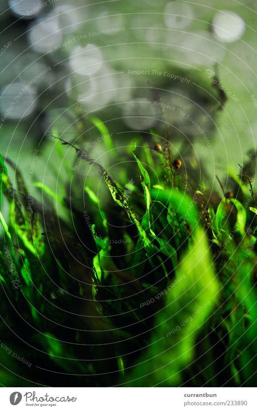 experimentelle ophtalmologie Wasser Freizeit & Hobby Freude Algen Unschärfe Schnecke grün Grünpflanze Aquarium Farbfoto Innenaufnahme Unterwasseraufnahme